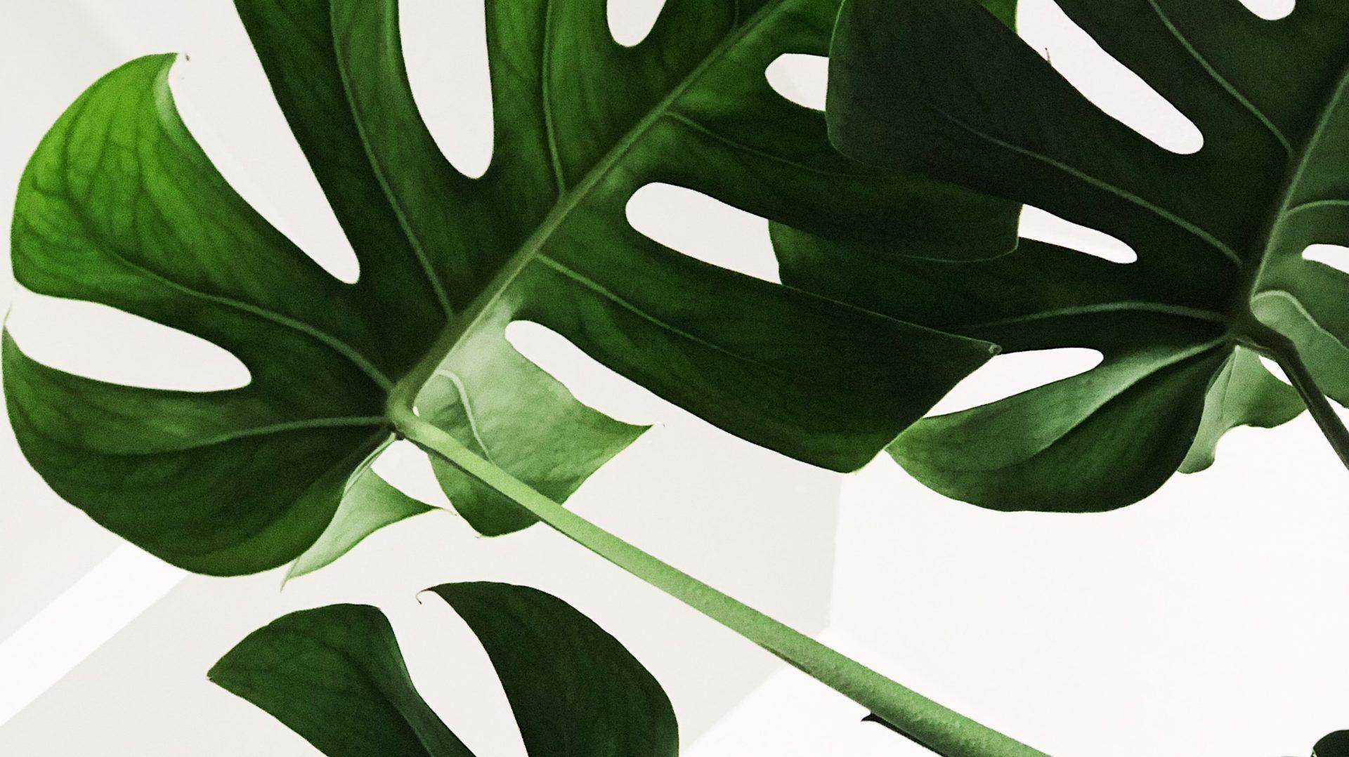 Be-Leaf